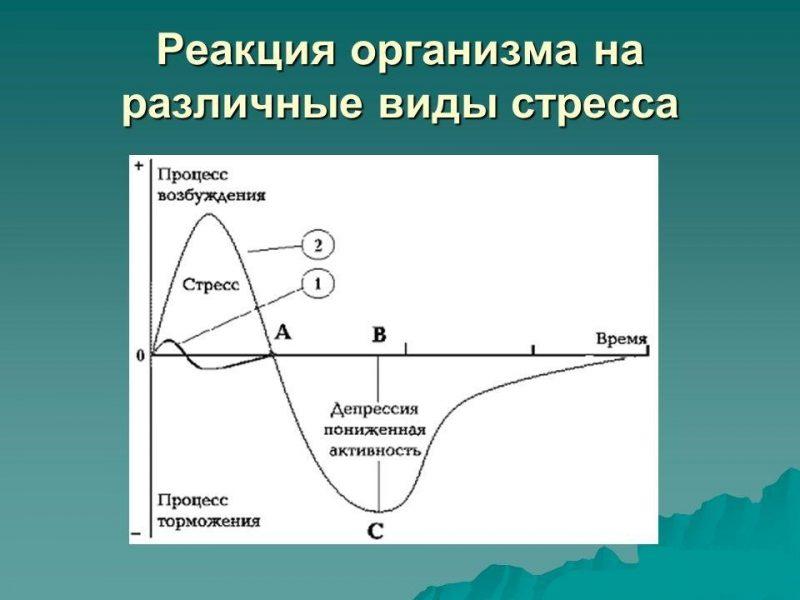реакция организма на различные виды стресса